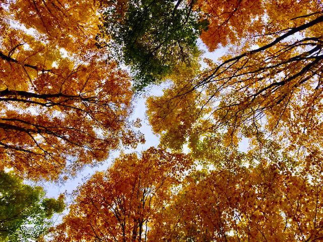 3-Seasons-Fall-b