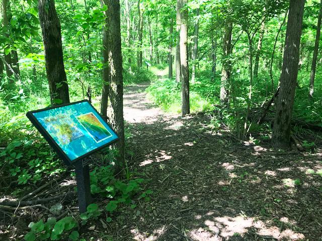 Dodge-Woods-Trail