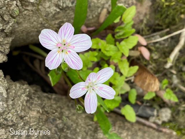 Spring-Wildflowers