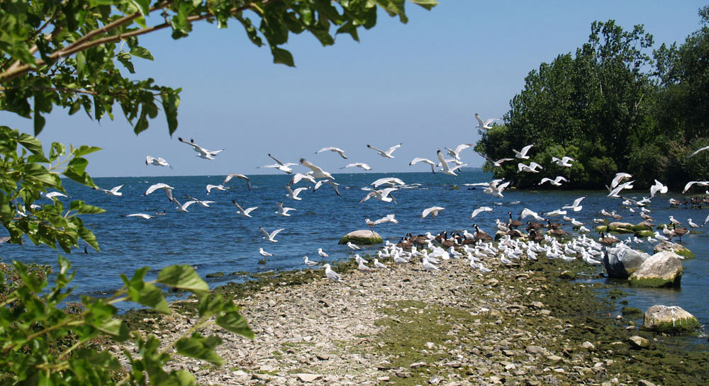 Beach at Lake Erie, Middle Bass Island
