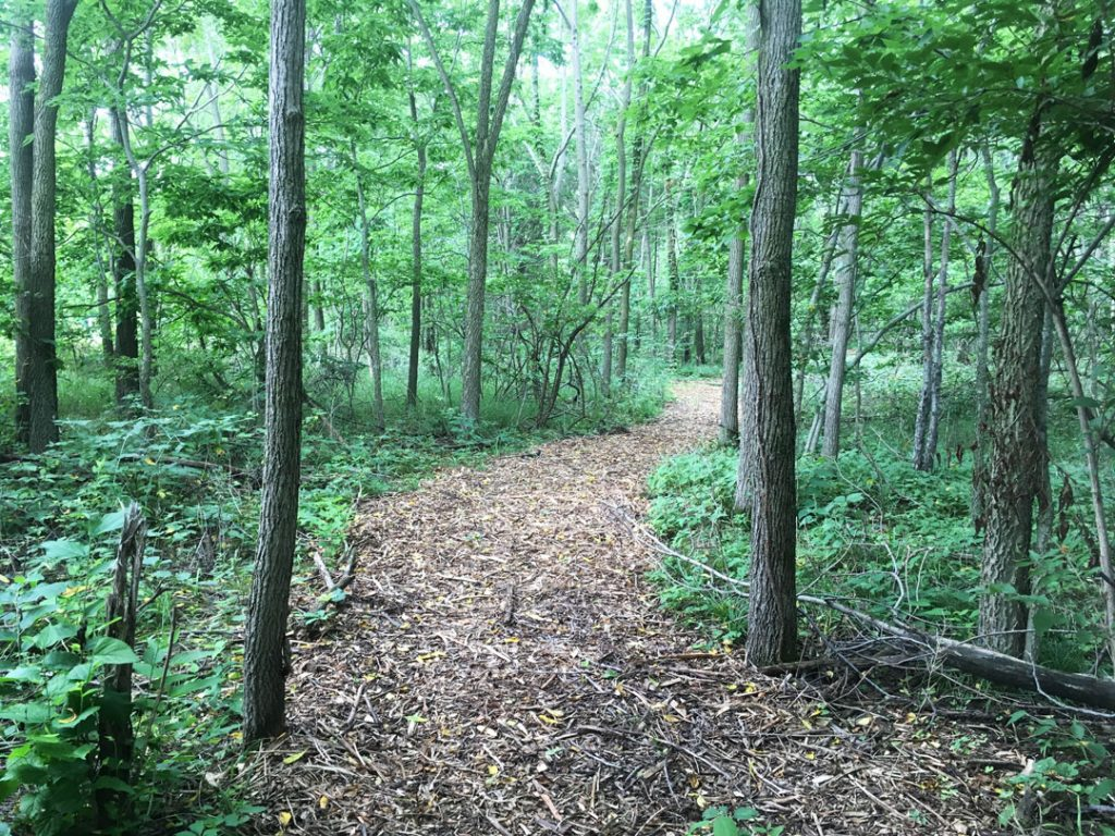 Nature Trail - Dodge Woods Preserve