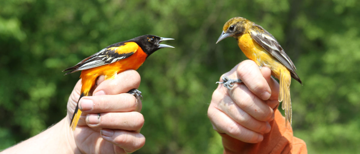 Lake Erie Islands Bird List