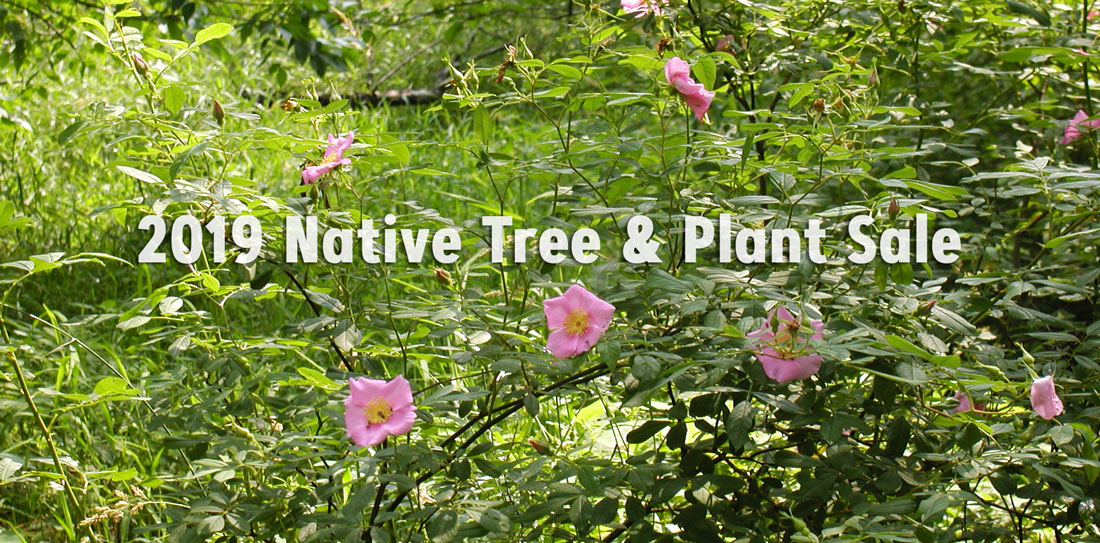2019 Native Tree & Plant Sale
