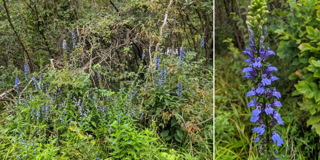 Middle Bass Island Wet Woodlands Reserve