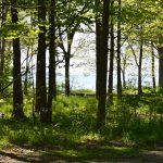 Lake Erie Islands Nature Preserve